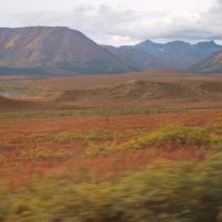 Tundra in the Denali Nationa park