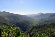 View from lookout at nature reserve near tea plantation