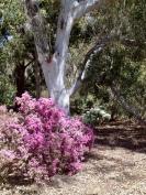 National Botanic Gardens - Springtime...Australian natives