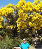 Native Wattle at front of our Theodore House...windows & skylight + pergola to Nth as well (Living Rm/Main Bedrm)+ views
